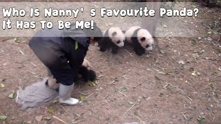 Who Is Nanny's Favourite Panda? It Has To Be Me! | iPanda