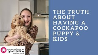 The Realities of having a Cockapoo Puppy & Young Children