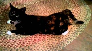 My horny cat in heat
