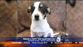 Wag! Dog Walking Delivers Rescue Puppies for Valentines Day