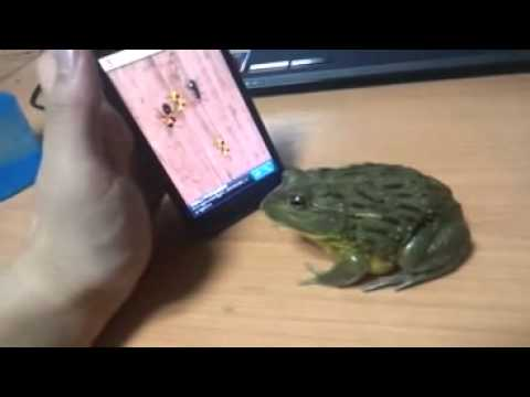 Humor video E-cards, How To Piss Off A Frog funny humor