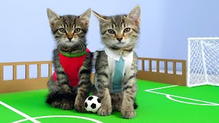Twin Kittens Play Football. Cute RIVALS match. Fun Cat Game DIY