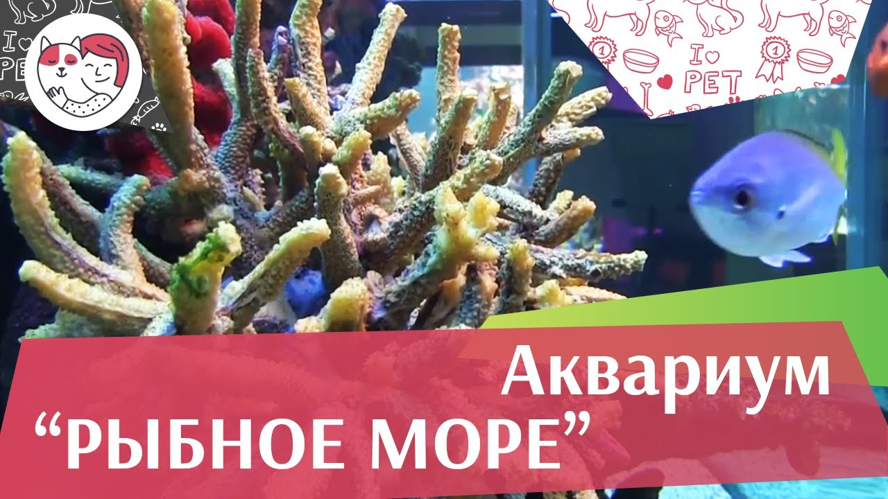 Аквариум Рыбное море АкваЛого на ilikePet
