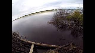 Река вага архангельской области рыбалка