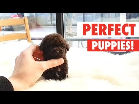 Perfect Puppies | Cute Puppy Video Compilation