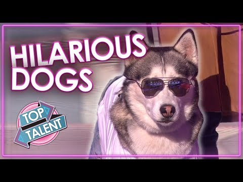 FUNNIEST DOG AUDITIONS & MOMENTS EVER On Britain's Got Talent | Top Talent