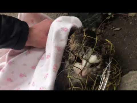 A un gatto striscia anche il peso perso