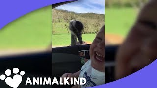 Kid laughing at ostrich is pure joy