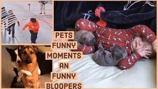 Funny dog videos, funny people enjoy kids