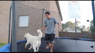 DOGS ON MY TRAMPOLINE!