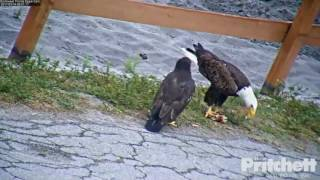 SWFL Eagles ~ M15 Brings Fish For E9; Harriet Feeds E9 On The Ground Part Two 3.14.17