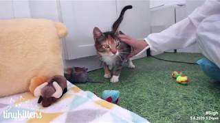 Feral catermelon Stella purrs for the first time!
