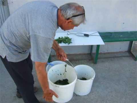 Śliwki suszone figi morele rodzynki moc