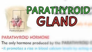 CH04-CHEMICAL COORDINATION IN ANIMALS-PART03-PARATHYROID GLAND