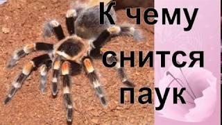 К чему снятся Пауки видео -К чему снится паук