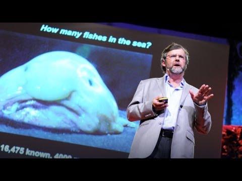 Welche Erscheinungsformen bei den Würmern
