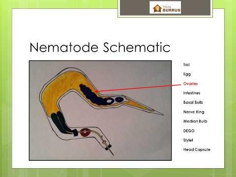 Kenet onkocitológiai dekódoláshoz