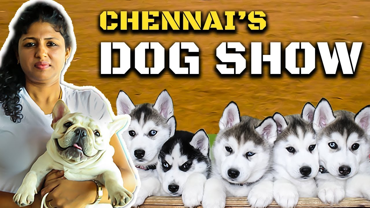 கண்கவரும் Chennais Dog Show : Cutest Dog Collection | Madras Canine Club