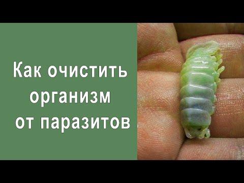 Фото всех паразитов обитающих в человеке