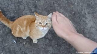 Приставучий кот