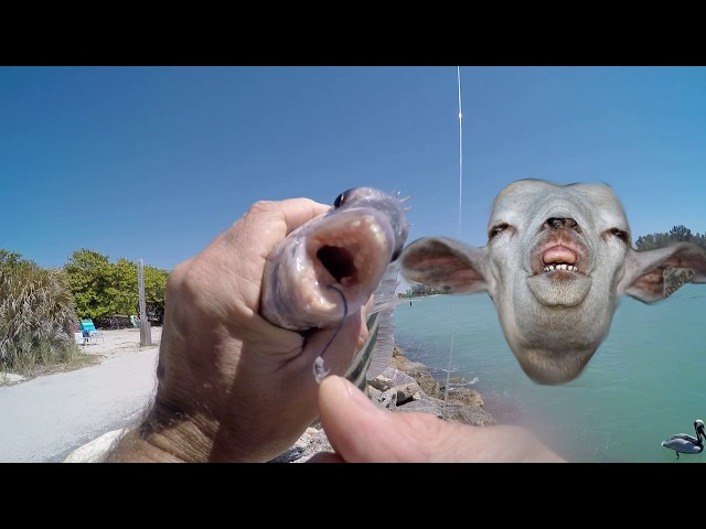 Catching Pompano Sheepshead Mangrove Snapper Fishing With Shrimp