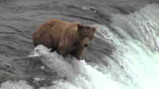 Die Bären der Brooks  Falls / Alaska
