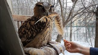 It's snowing! Owl raging over being denied sitting under snow
