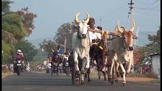 Rekla Race - 2018/01/21 Theni District Chinnamanur  (Periyamaadu)