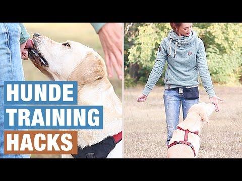 Hund beschäftigen | HUNDE GEISTIG AUSLASTEN | HUNDETRAINING HACKS | Hundeerziehung