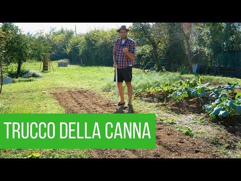 Come coltivare la cipolla: 3 metodi differenti