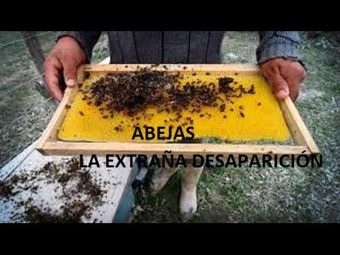 Alarmante desaparición de las abejas