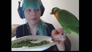 Salsa, my rainbow lorikeet, eating with me