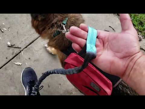 Hands Free Jogging Dog Leash Review With Our German Shepherd