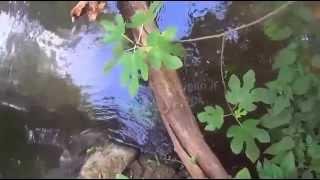 preview picture of video 'www.daniloianniello.it Cascate di Monte Gelato Calcata VT'