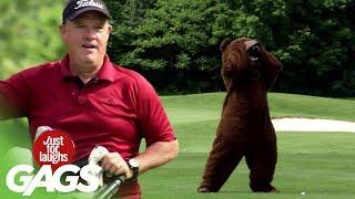 farse ursul pe terenul de golf