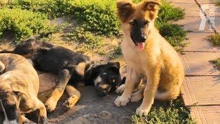 ЯБ2018 Помощь бездомным животным «Азира»