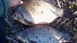 Ловля рыбы в кустанайской области