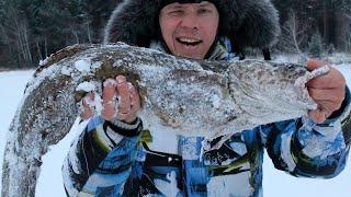Сибирский налим. Часть первая.