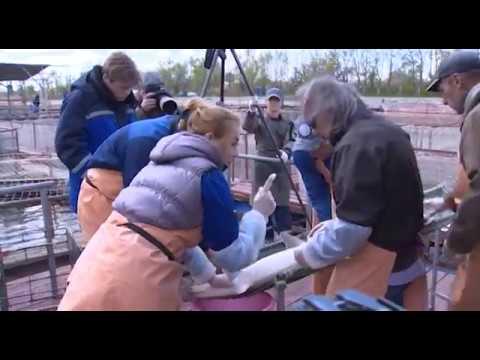 La pesca su un crucian in uno zatoka