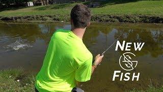 Catching NEW GOOGAN Tank Fish! (Part 1)