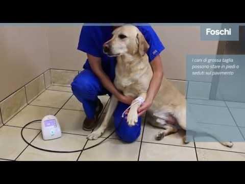 Suntech Vet20 -Foschi- Come misurare la pressione nei cani e nei gatti