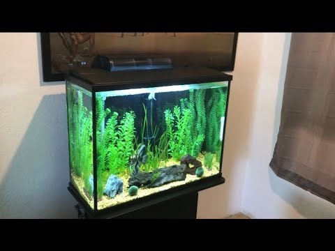 PetSmart Top Fin Essentials 37 Gallon Aquarium Kit Review