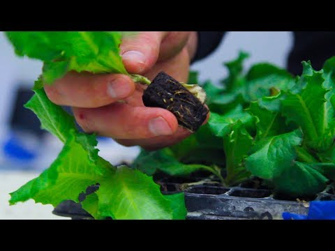 Process of Healthy Seedling Production