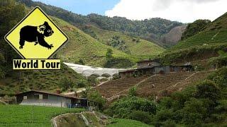 preview picture of video 'Cameron Highland en Malaisie ( Tour du monde voyage voyages vacances sejour )'