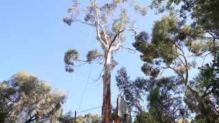 preview picture of video 'Adelaide Hills Tree & Stump Removal - Timelapse Video'