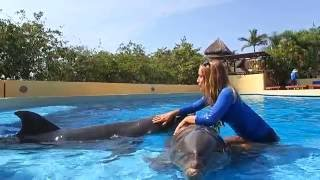 A Day In Mexico- Working With Dolphins