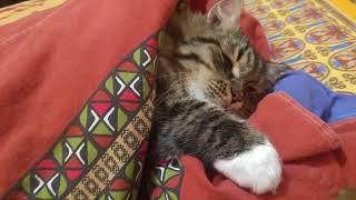 Смешной кот спит с мышей) Funny cat with mouse