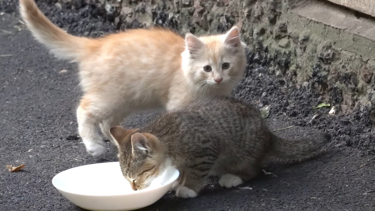 New kittens drink milk and eat food