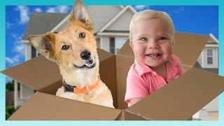MOVING DAY! | Look Who's Vlogging: Daily Bumps