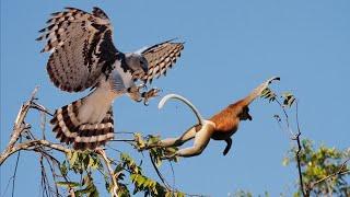 10 Batallas Épicas de Animales Captadas en Cámara | E.p 29 | Aguila vs Oso Perezoso